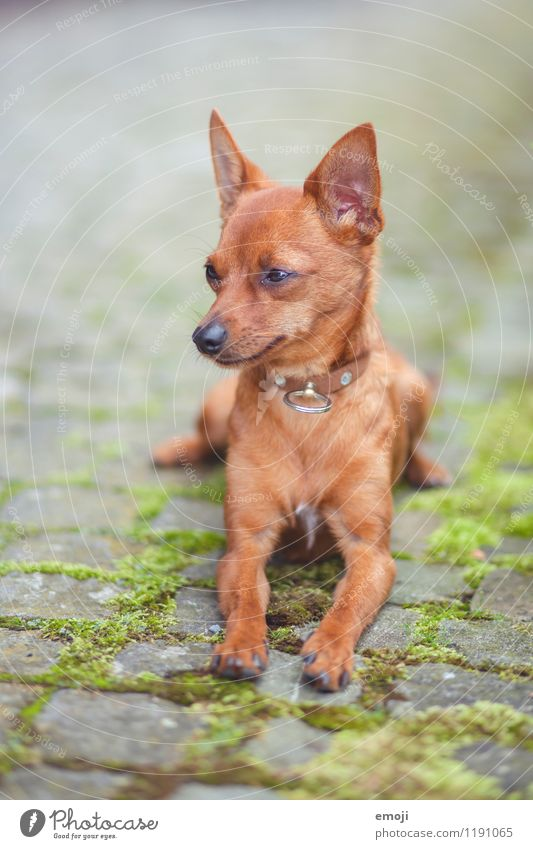 dog Animal Pet Dog Animal face 1 Baby animal Cuddly Small Colour photo Exterior shot Deserted Day Shallow depth of field Animal portrait Full-length