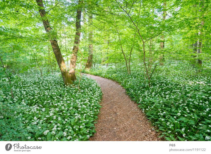 walk in the woods Hiking Nature Plant Sunlight Spring Summer Beautiful weather Forest To enjoy Friendliness Warmth Soft Happy Joie de vivre (Vitality)
