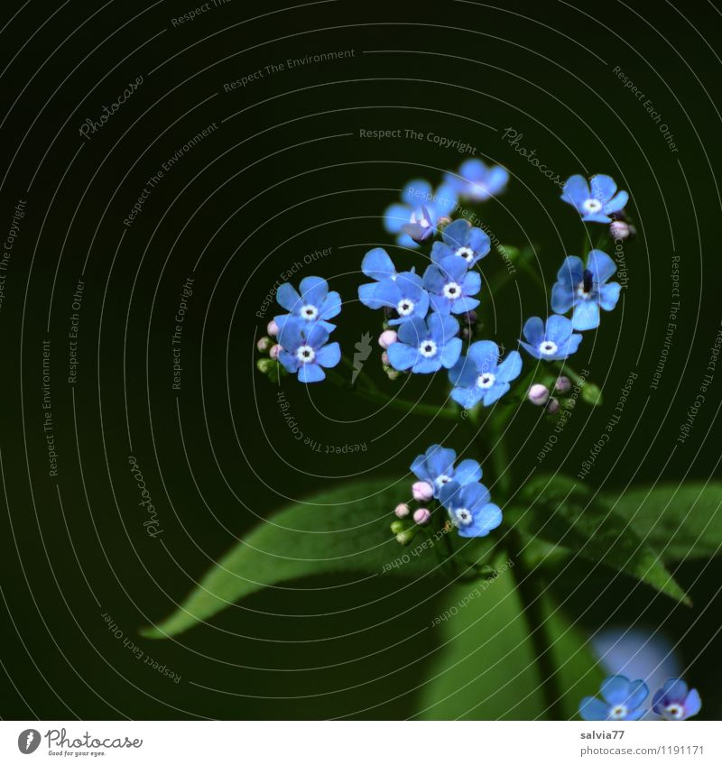 Nature Blue Plant Beautiful Green Summer Flower Leaf Forest Spring Blossom Natural Happy Small Garden Fresh