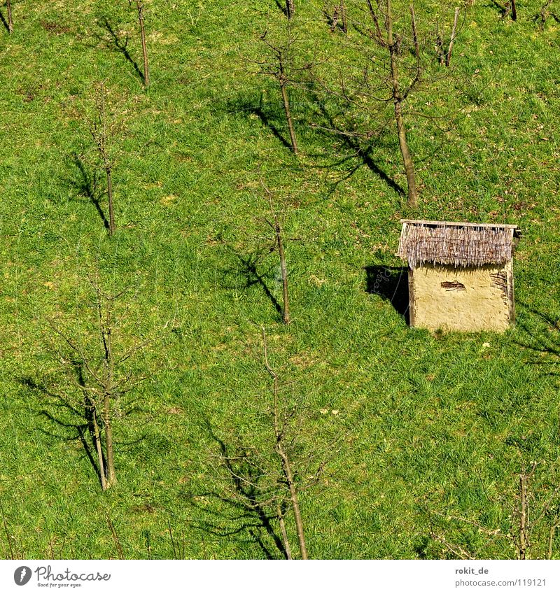 shelter..hut Fruittree meadow Field Tree Storm Apple tree Plantation Meadow Small Protection Hut fruit grower Weather Pear tree Tool Shed Barn from the tower