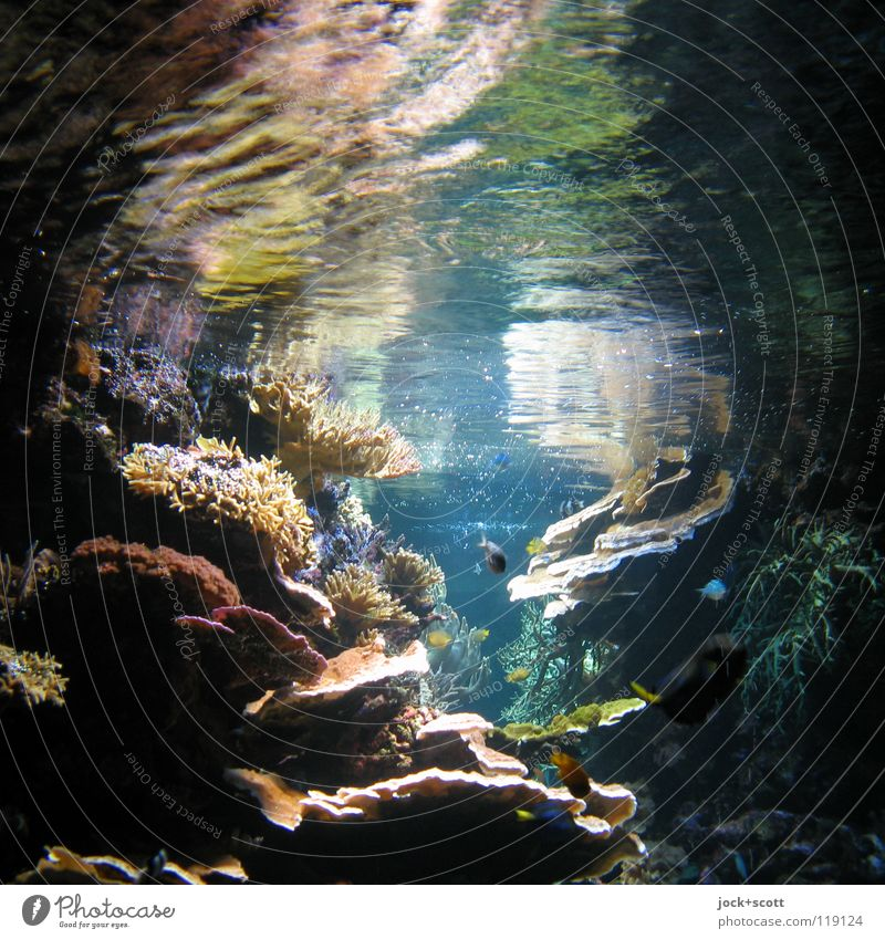 Colourful life under water Exotic Water Warmth Coral reef Ocean Pacific Ocean Fish Aquarium Stone Illuminate Healthy Bright Maritime already Soft Moody