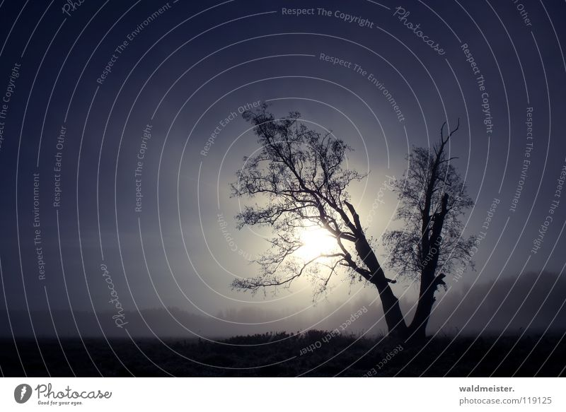 Nature Sky Tree Sun Blue Calm Loneliness Meadow Landscape Fog Romance Longing