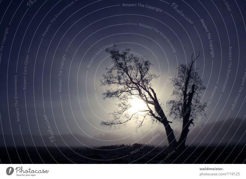 Tree in the morning Fog Meadow Romance Calm Longing Loneliness Sun Sky Landscape Blue Nature Müritz National Park