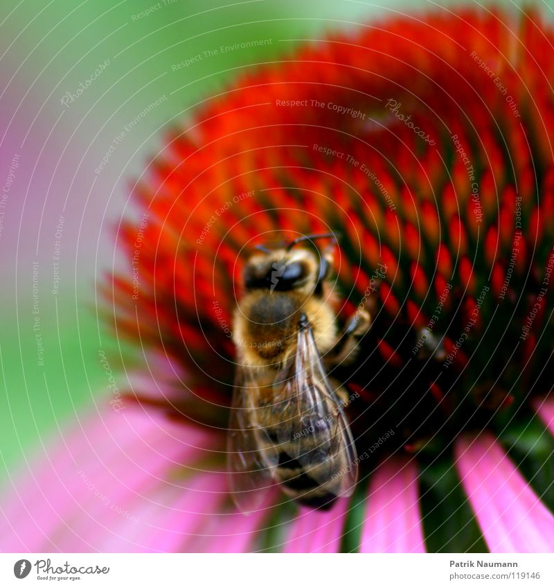 Nature Green Red Plant Flower Animal Nutrition Work and employment Pink Sweet Near Bee Insect Harvest Depth of field Crawl