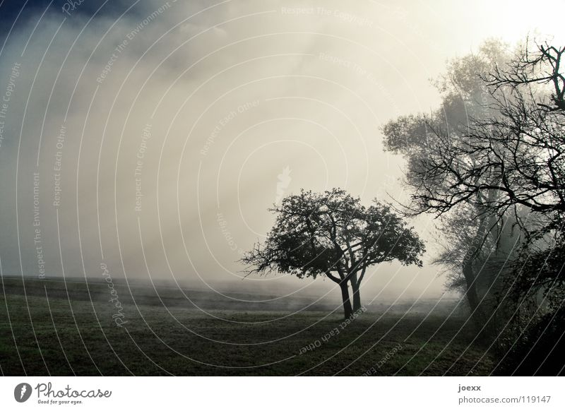 hope Field Tree Row of trees Ground fog Relaxation Autumn Idyll Morning Think Fog Wall of fog Unclear Poetic Romance Calm Solar Power Sunlight Sunbeam Moody