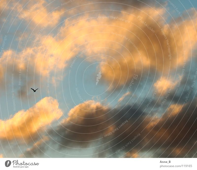 outlaw Freedom Air Sky Clouds Bird Wing 1 Animal Movement Flying Small Blue Yellow Black Calm Uniqueness Ease Nature Orange Sunlight Gray Colour photo
