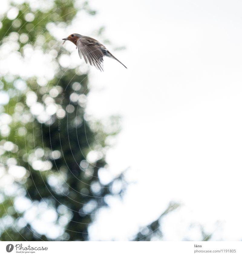 fly Bird Robin redbreast Nature Flying Tree Green
