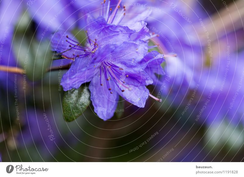 purple. Summer Garden Environment Nature Landscape Plant Flower Blossom Park Blossoming Faded Beautiful Green Violet Spring fever Colour Growth Change