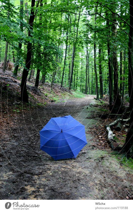 Nature Green Blue Colour Forest Lanes & trails Puzzle