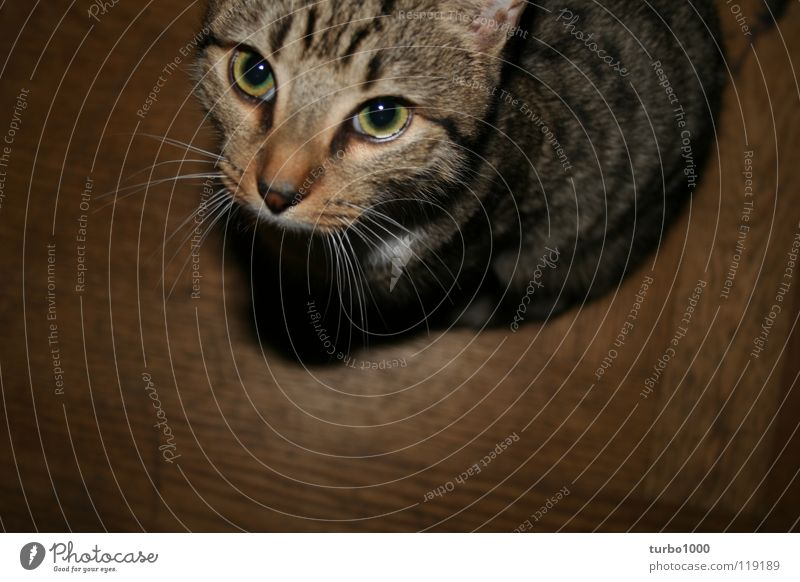 Beautiful Calm Eyes Cat Contentment Sit Trust Wild animal Appetite Feeble Feeding Feed Crouch Domestic cat Meow Purr