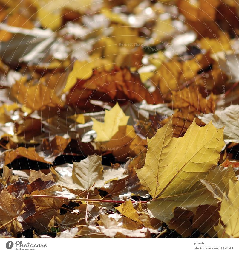 Nature Tree Leaf Calm Yellow Warmth Autumn Sadness Brown Orange Gold Transience Branch End Seasons Limp