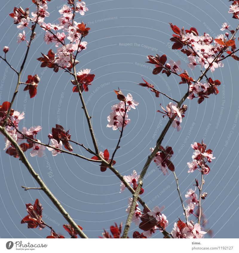 Sky Nature Plant Beautiful Tree Leaf Life Blossom Spring Natural Garden Bright Wild Growth Esthetic Energy