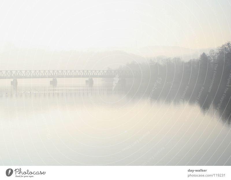 Nature Water Tree Calm Forest Relaxation Mountain Lanes & trails Lake Landscape Bird Coast Fog Bridge Idyll Duck