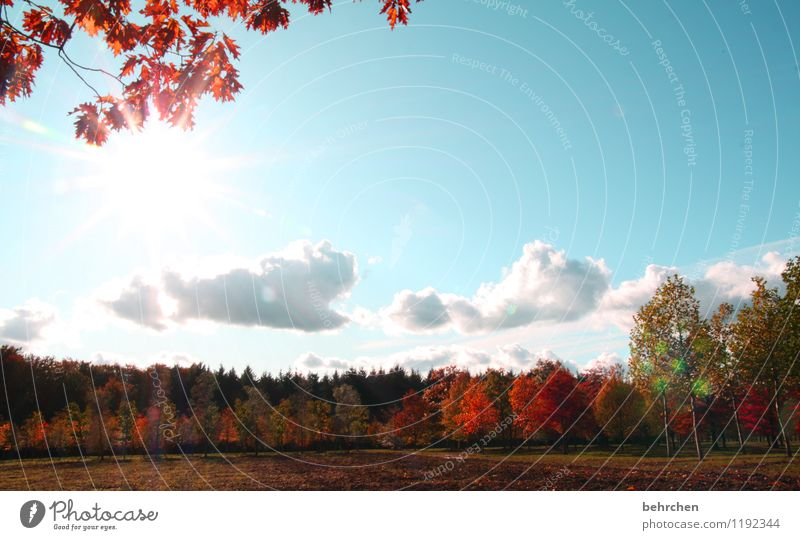 Sky Nature Plant Blue Beautiful Tree Leaf Clouds Forest Warmth Autumn Orange Field Branch Beautiful weather Tree trunk