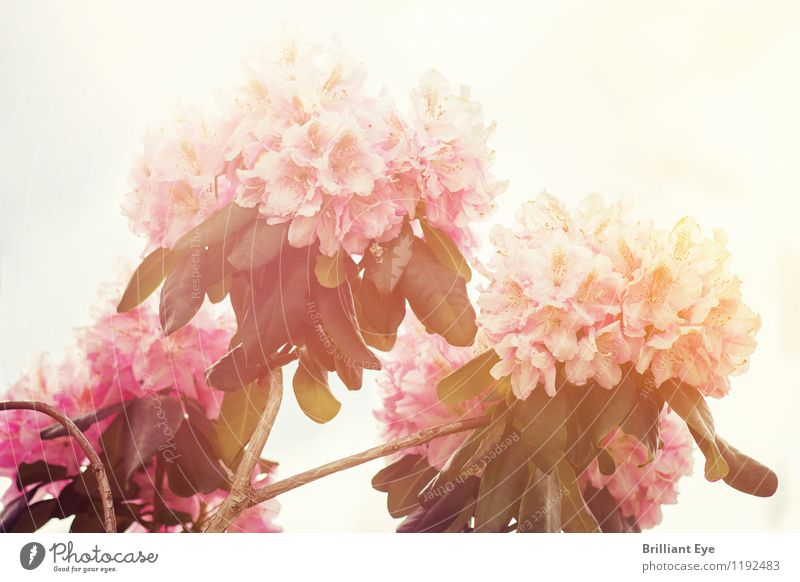 Sky Nature Plant Beautiful Flower Environment Warmth Spring Emotions Moody Bright Pink Glittering Fresh Elegant Esthetic