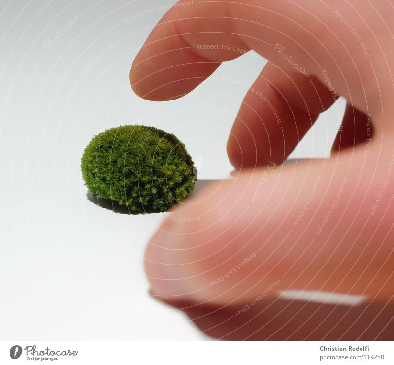 Human being Hand White Green Yellow Fingers Moss Isolated Image Algae Encalypta Greeny-yellow Eukaryote
