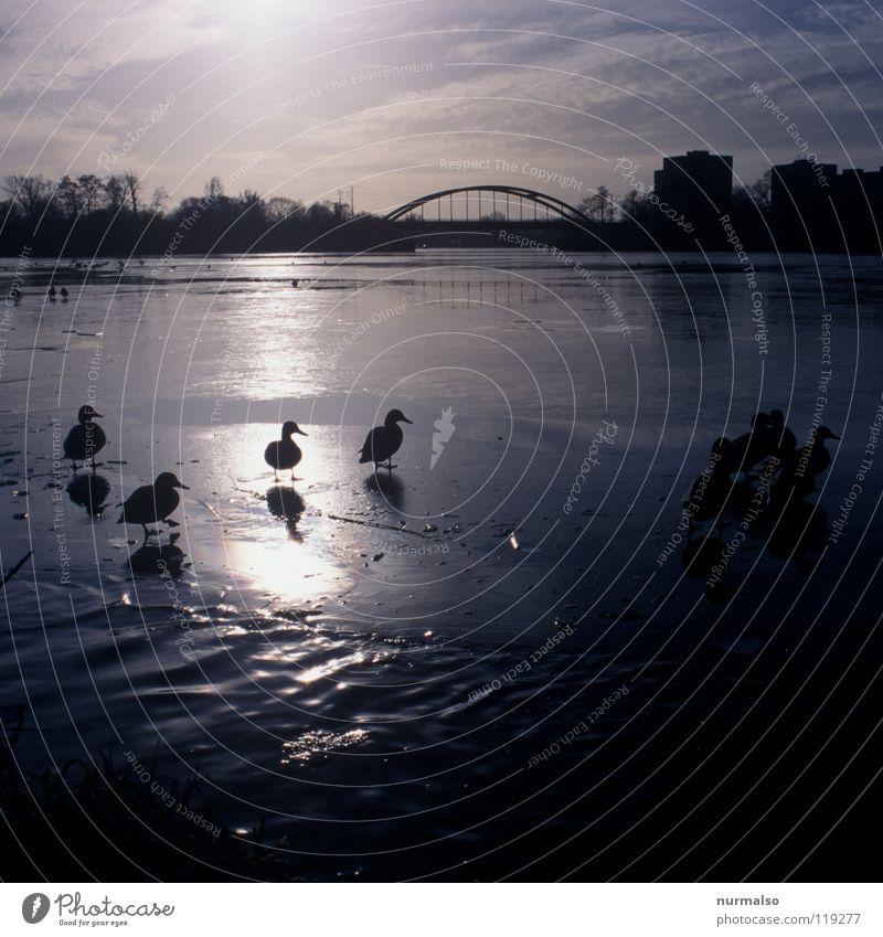 Water Sun Animal Cold Emotions Berlin Ice Fear Flying Multiple Railroad Feather Bridge River Bay Seasons
