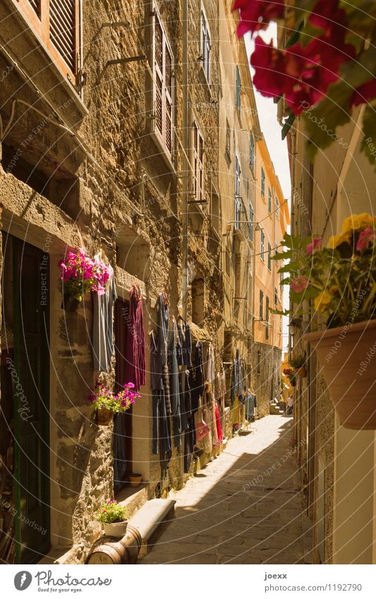 Narrow lane Vacation & Travel Tourism Summer Flower Corniglia Italy Village House (Residential Structure) Wall (barrier) Wall (building) Facade Door