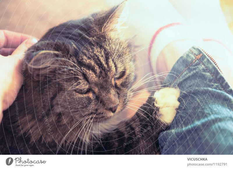 Cuddling with an old cat Lifestyle Flat (apartment) Human being Woman Adults Hand 1 Animal Pet Cat Love Cool (slang) Emotions Moody Joy Contentment Design