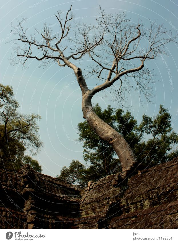 Ta Prohm Tree I Nature Animal Sky Summer Beautiful weather Plant Virgin forest Ruin Manmade structures Architecture Wall (barrier) Wall (building)