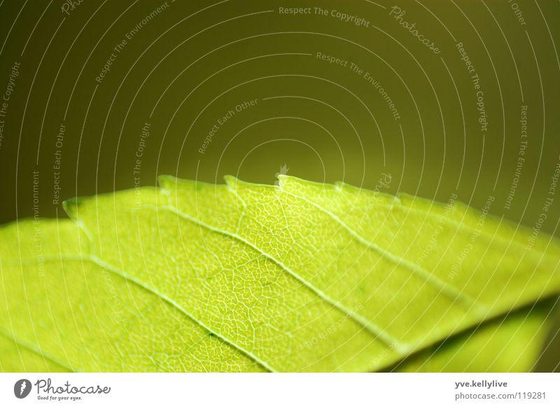 Sheet II Leaf Green Window Reflection Dark green Bright green Macro (Extreme close-up) Close-up Division