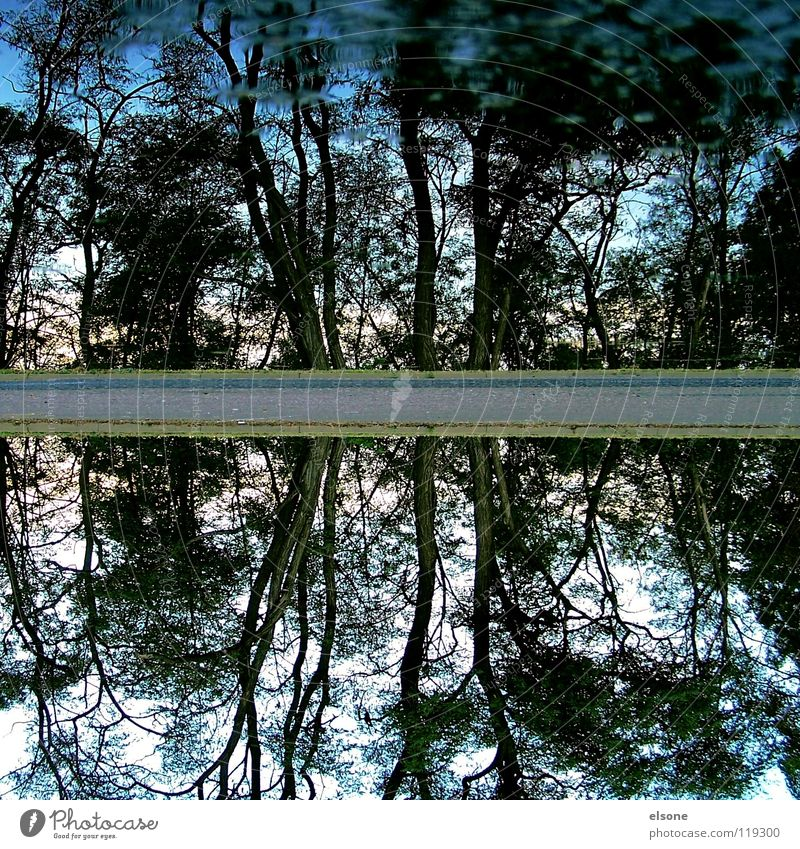 ::TWICE:: 2 Tree Forest Reflection Puddle Lake Flow Electricity Hissing Waves Trickle Bubbling Source Cluck Splashing Body of water Beach Mirror Surface