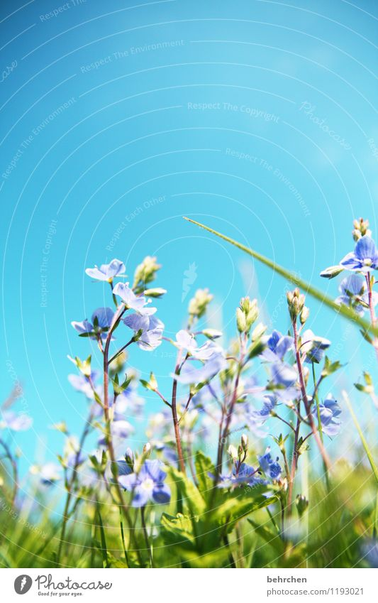 Sky Nature Plant Blue Beautiful Summer Flower Leaf Warmth Spring Blossom Meadow Grass Small Garden Park