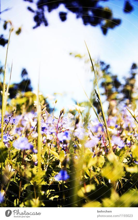 Sky Nature Plant Blue Green Beautiful Summer Tree Flower Leaf Forest Blossom Spring Meadow Grass Garden