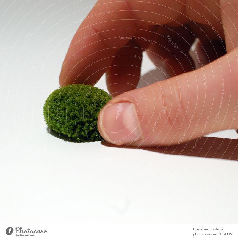 Hand White Green Yellow Fingers Moss Algae Encalypta Greeny-yellow Eukaryote