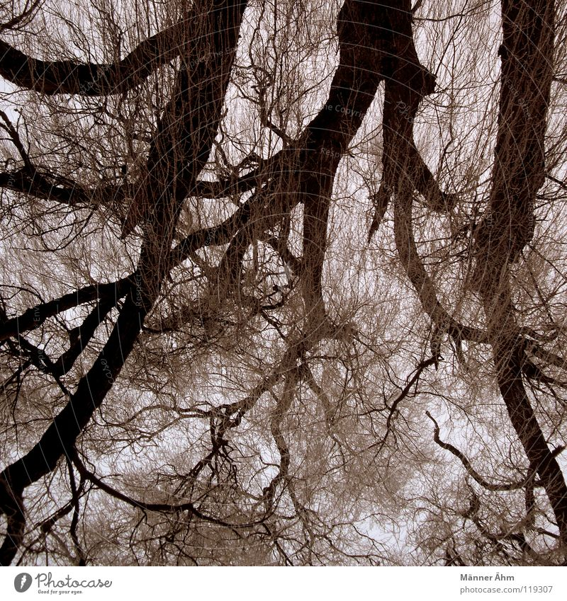 Sky Tree Clouds Leaf Forest Wood Railroad Bushes Branch Tree trunk Blood Brain and nervous system