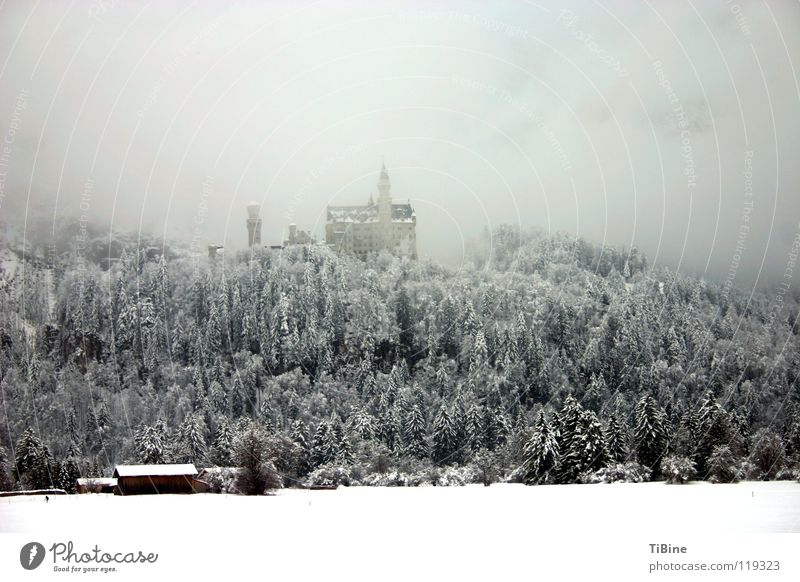 Tree Winter Forest Snow Fog Castle Bavaria Neuschwanstein