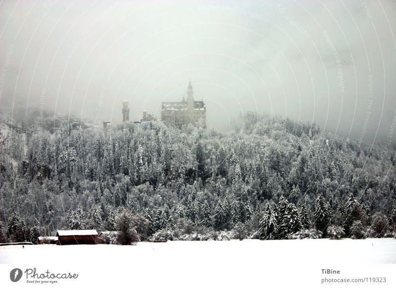 Tree Winter Forest Snow Fog Castle Bavaria Neuschwanstein