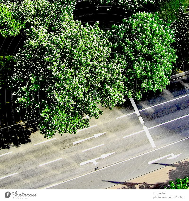 on the track Plant Tree Traffic infrastructure Street Lanes & trails Arrow Gray Green Orientation Exterior shot Aerial photograph Bird's-eye view Treetop