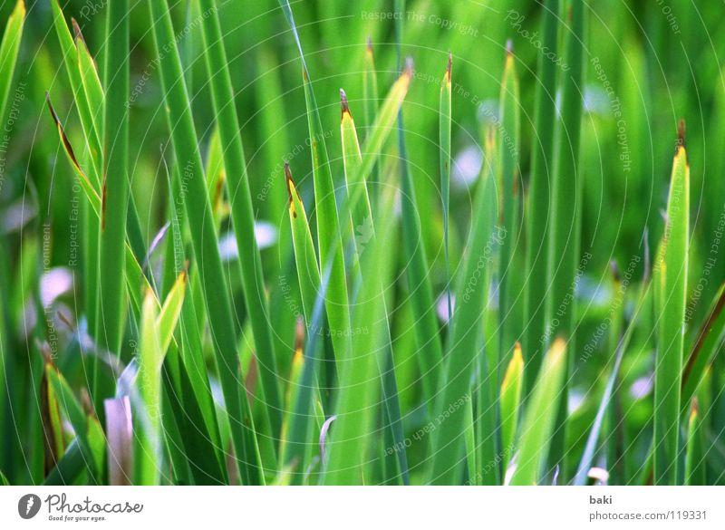 Nature Green Plant Grass Landscape Coast Fresh Common Reed