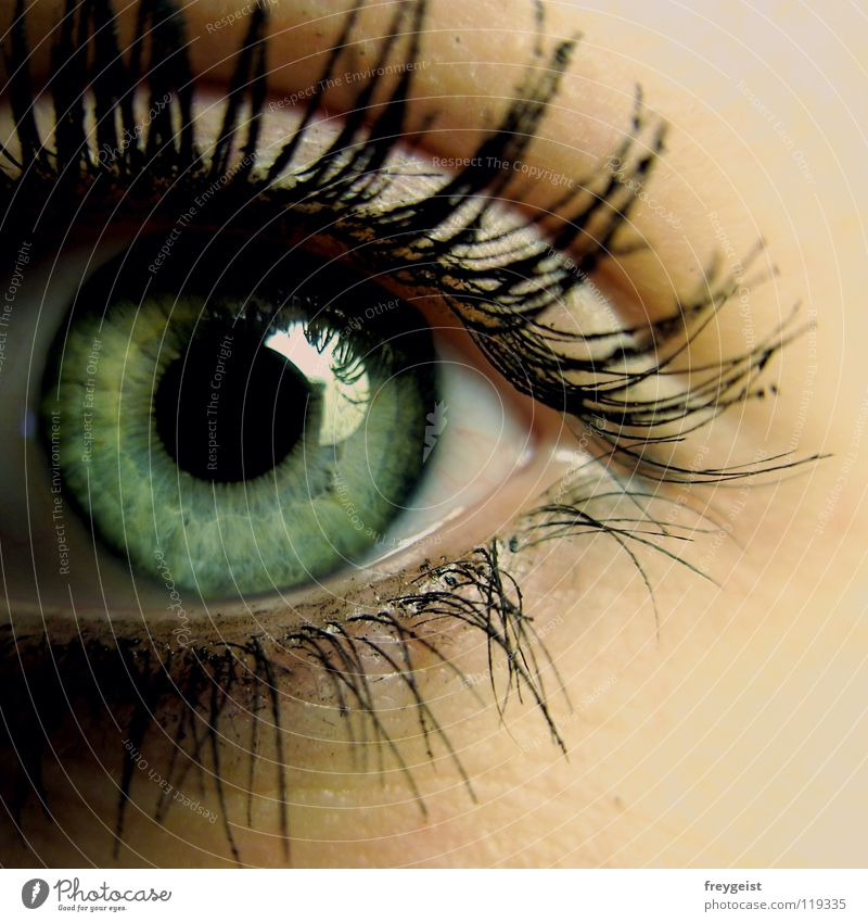 Green Beautiful Black Eyes Gray Skin Delicate Near Eyelash Human being Iris