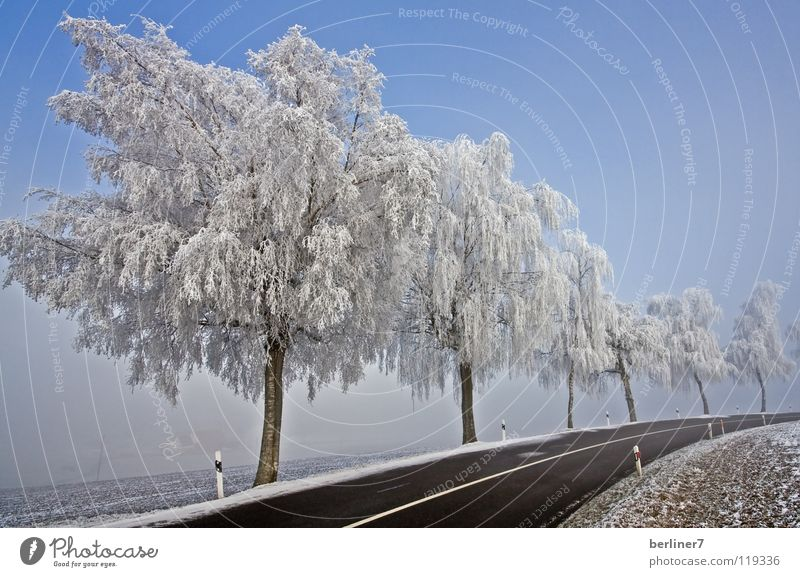 Hoarfrost in the right-hand bend Winter Snowscape Winter mood Hoar frost White Cold Roadside Street boundary Freeway Curve Sky Blue