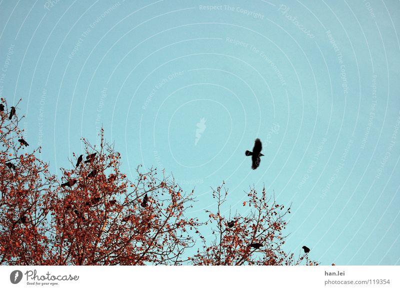 Tree Bird Sit Flying Multiple Branch Observe Past Fairy tale Crow Raven birds
