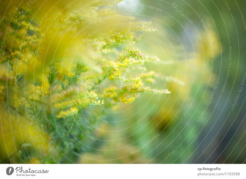 Nature Plant Green Summer Yellow Warmth Spring Blossom Natural Beautiful weather