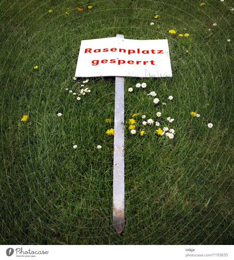 *ochnö* Leisure and hobbies Playing Summer Meadow flower Daisy Grass surface Prohibition sign Characters Signs and labeling Signage Warning sign Green Red