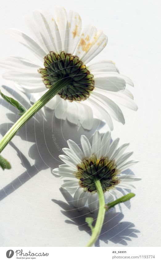 Nature Plant Green Colour Summer White Flower Calm Life Blossom Interior design Meadow Style Garden Bright Park