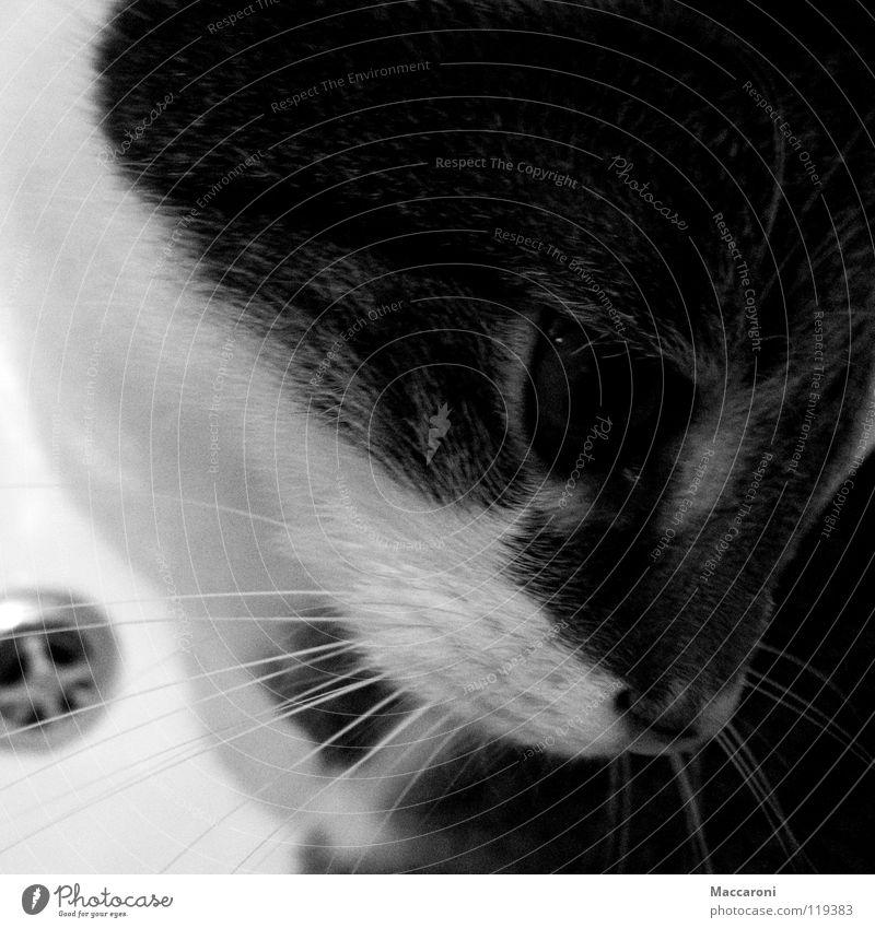 Cat White Water Dark Eyes Hair and hairstyles Small Swimming & Bathing Metal Fear Bathtub Sweet Nose Soft Bathroom Pelt