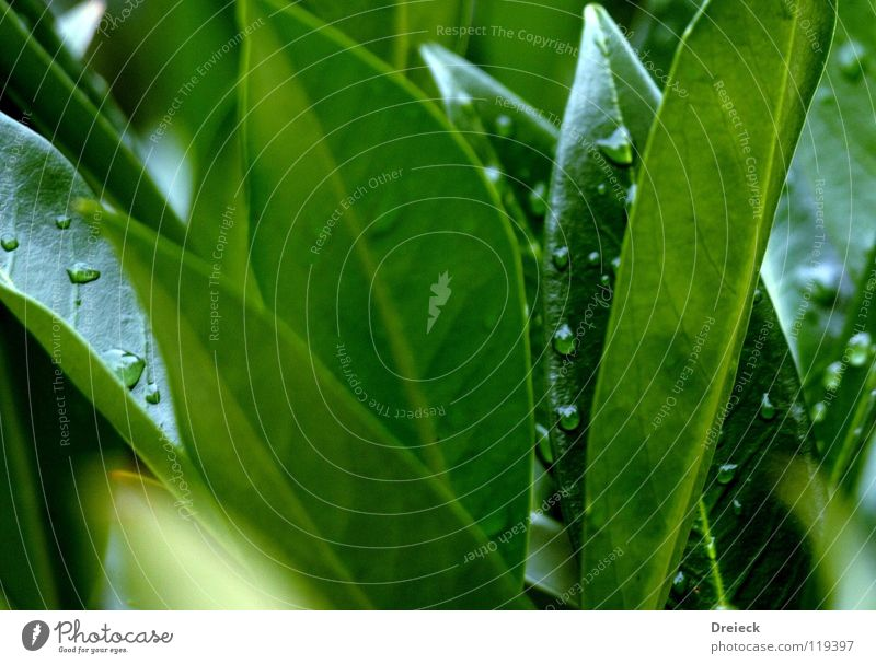 Dropping Green Triangle Grass Tree Plant Flower Blossom Meadow Blade of grass Environment Thread Damp Wet Dark green Fluid wag Nature Shadow Lawn Drops of water