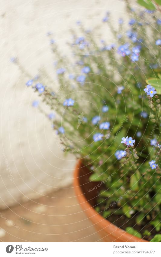 Blue Plant Beautiful Green Flower Spring Blossom Gray Small Garden Brown Growth Round Violet Delicate Curve