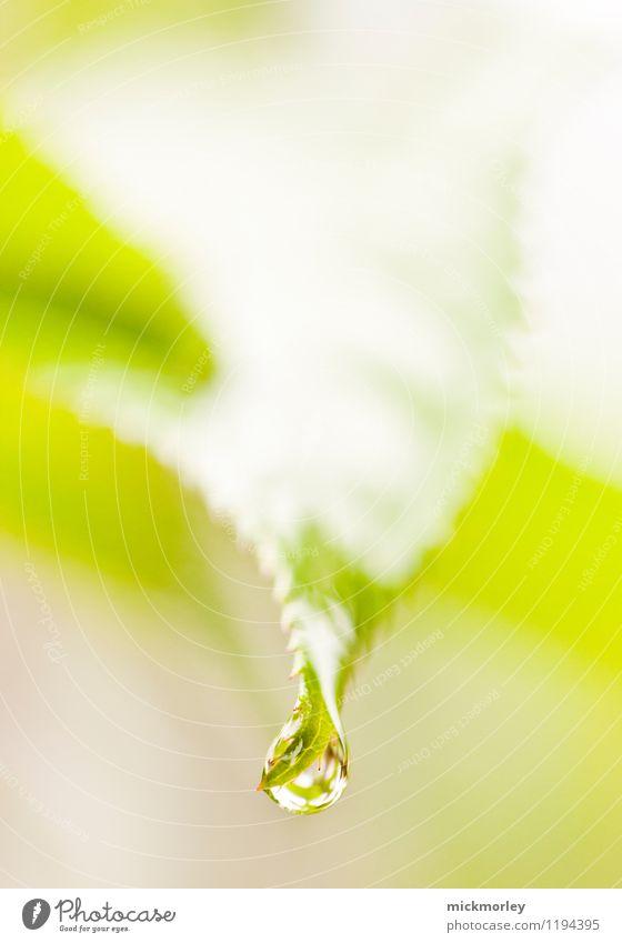 Nature Plant Beautiful Green Water Leaf Calm Environment Life Healthy Think Glittering Dream Rain Fresh Elegant