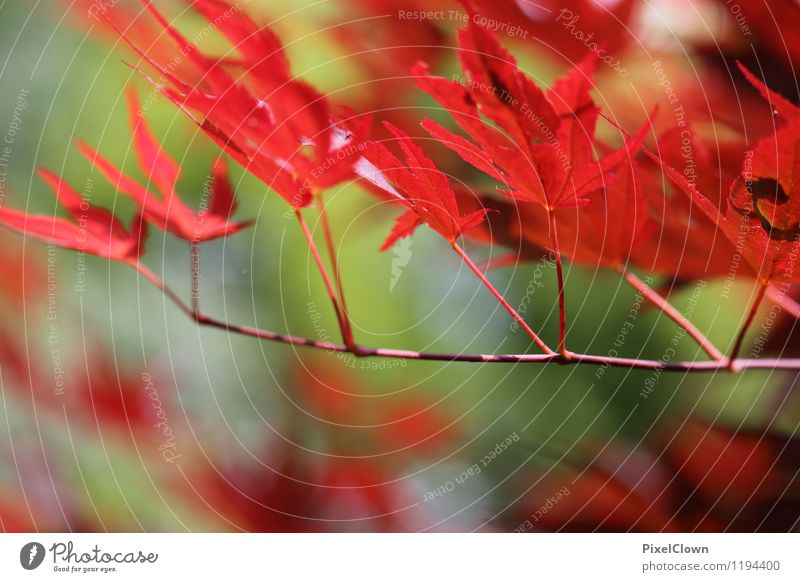 Nature Vacation & Travel Plant Summer Tree Red Leaf Animal Forest Emotions Style Happy Wood Garden Moody Park