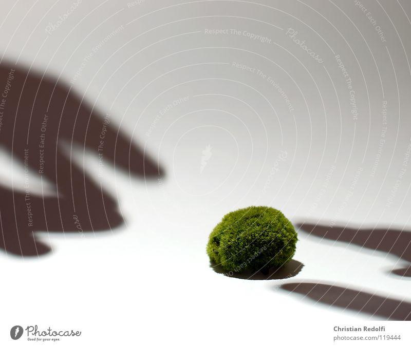 Hand White Green Yellow Fingers Moss Algae Shadow play Isolated Image Encalypta Greeny-yellow Eukaryote