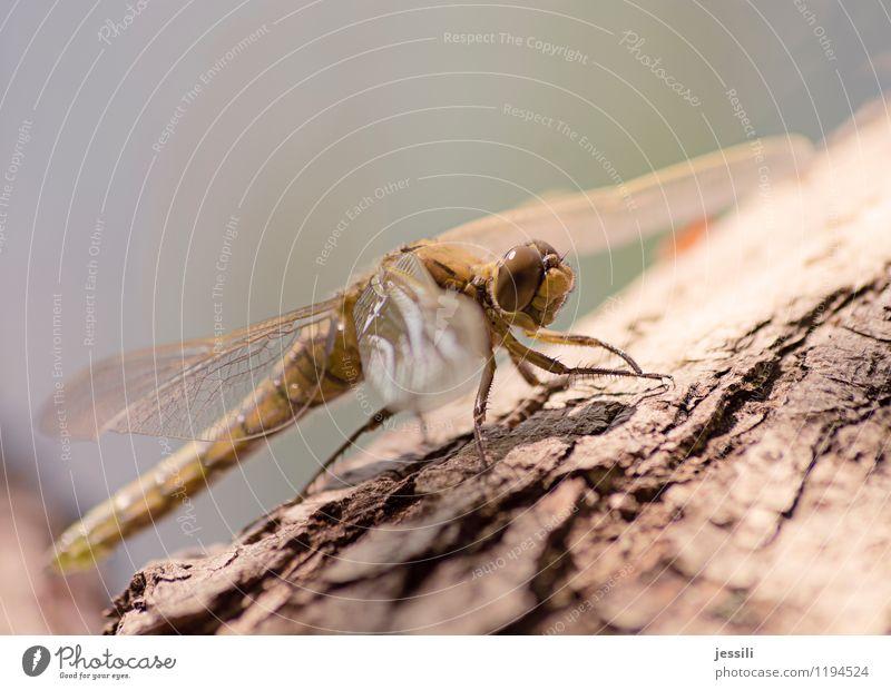 Tree Animal Spring Lake Success Observe Friendliness Discover Animal face Brash Big dragonfly