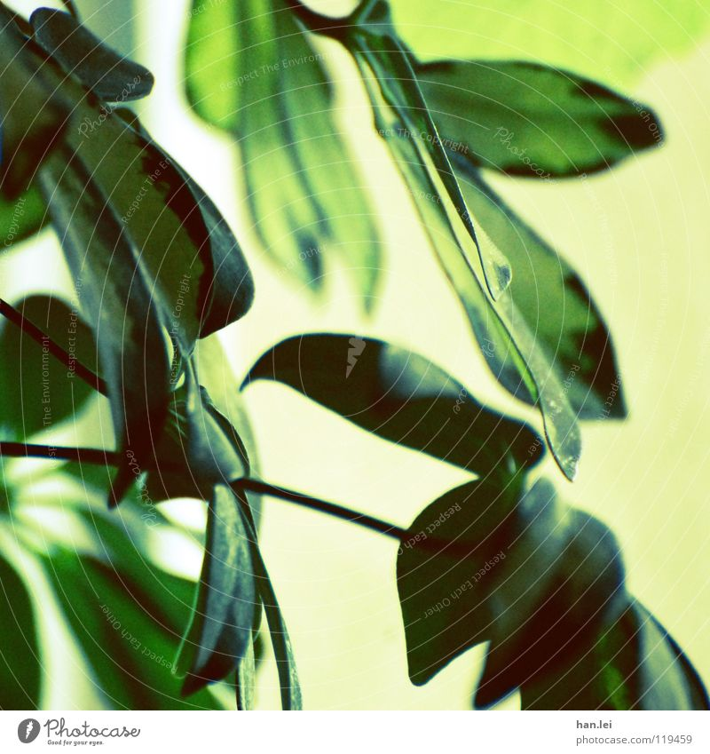 Green Plant Yellow Style Park Decoration Virgin forest Houseplant Photosynthesis Greeny-yellow