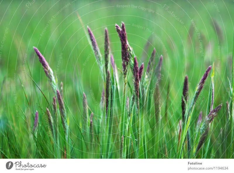 Nature Plant Green Summer Environment Natural Meadow Grass Bright Beautiful weather Violet Near