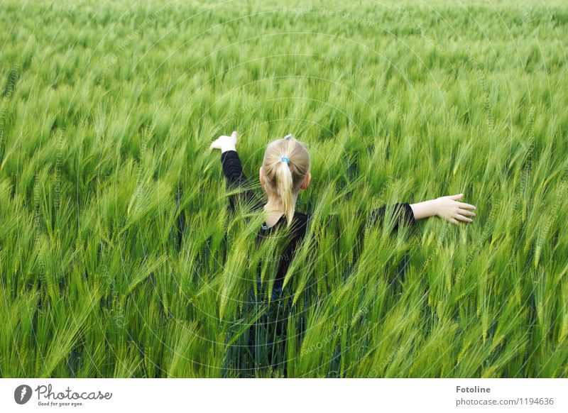 in the cornfield Human being Feminine Child Girl Infancy Body Head Hair and hairstyles Arm Hand Fingers 1 Environment Nature Landscape Plant Beautiful weather